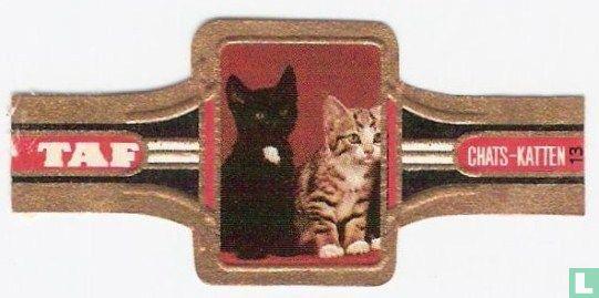 Taf - Katten 13