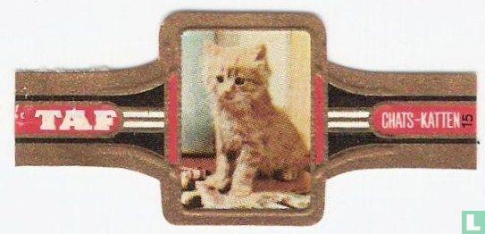 Taf - Katten 15