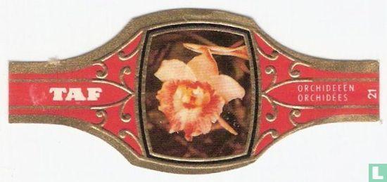 Taf - Orchideeën 21