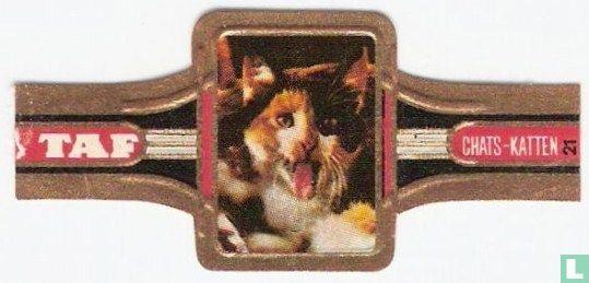 Taf - Katten 21