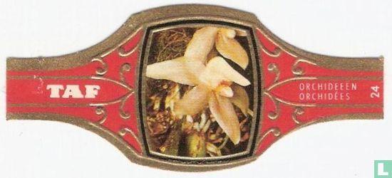 Taf - Orchideeën 24