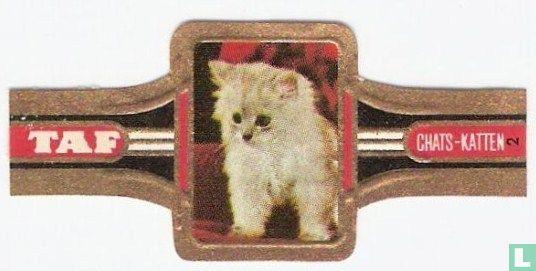 Taf - Katten 2