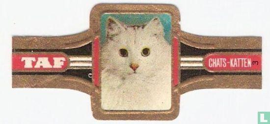 Taf - Katten 3
