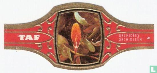 Taf - Orchideeën 6