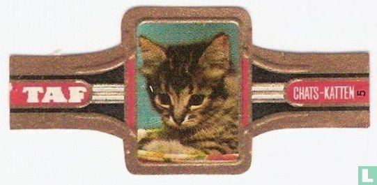 Taf - Katten 5