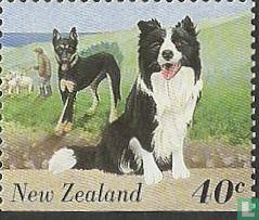 New Zealand - Farm Animals
