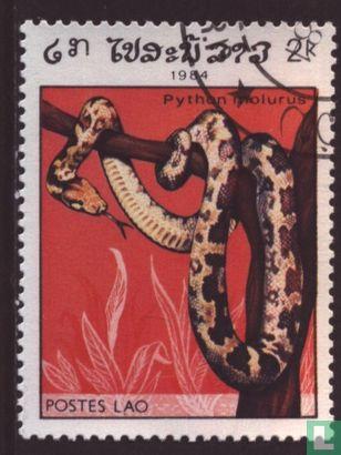 Laos - Reptielen