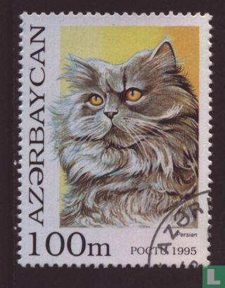 Azerbaijan - Cats