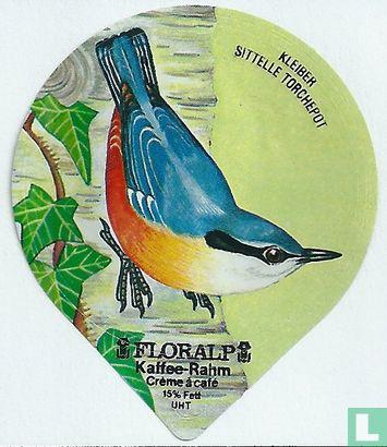 Vögel - Kleiber