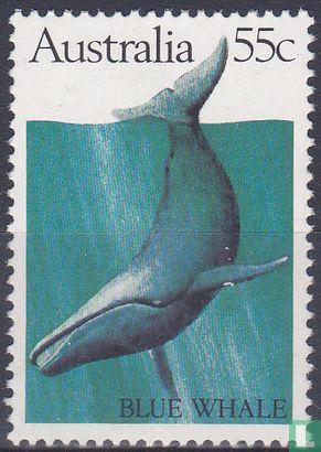 Australië [AUS] - Walvissen