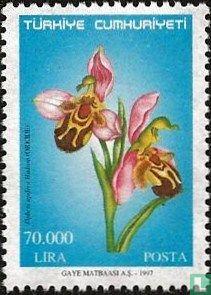 Türkei - Orchideen