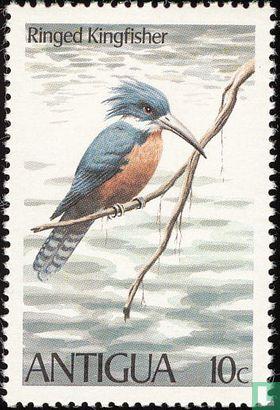 Antigua - Vogels