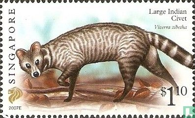 Singapore - Civet