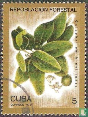 Cuba - Nationale Bebossing