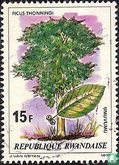 Rwanda - Bomen en struiken