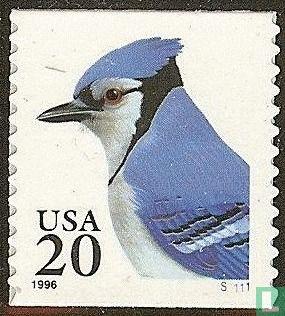 Verenigde Staten van Amerika (USA) - Blauwe gaai