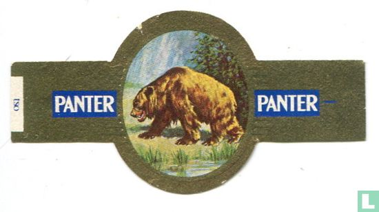 Panter - Arcos tryglodytus