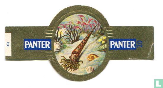 Panter - Meganautilus