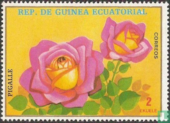 Äquatorialguinea - Rose