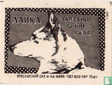 """?A?KA - """"Eskimo hond"""""""