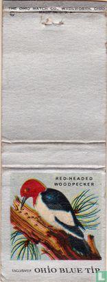 Red-header woodpecker