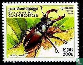 Cambodja - Kevers