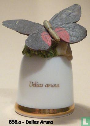 Vlinder - Delias Aruna - Image 1
