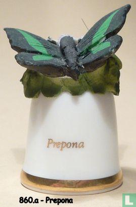 Vlinder - Prepona - Image 1