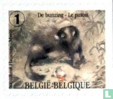 België [BEL] - De marterachtigen
