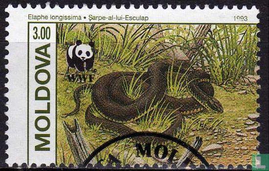 Moldavië - WWF - Slangen