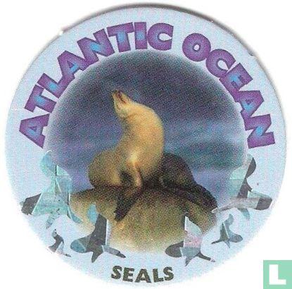 Atlantic Ocean - Seals - Afbeelding 1