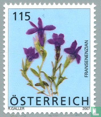 Oostenrijk [AUT] - Bloemen