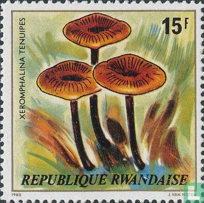 Rwanda - Paddenstoelen