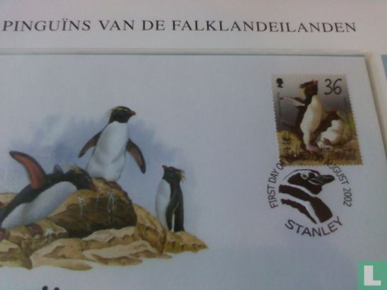 Falkland Islands - Southern rockhopper penguin