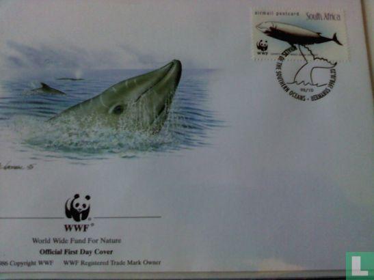 Zuid-Afrika - WWF - Walvissen