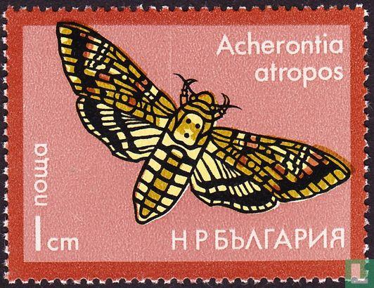 Bulgaria [BGR] - Moths