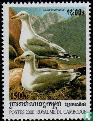 Cambodja - Vogels