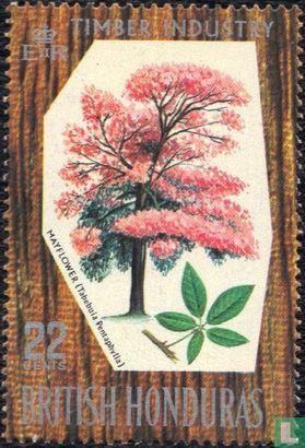 British Honduras - Native Trees