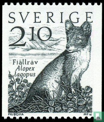 Schweden [SWE] - Polarfuchs