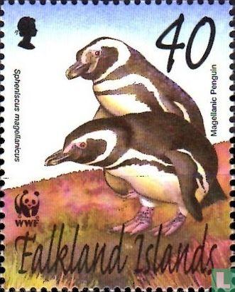 Falklandeilanden - Magelhaenpinguïn