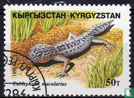 Kirgizië - reptielen