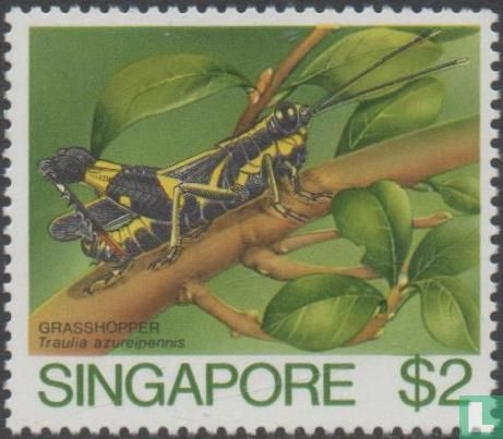 Singapore - Insects
