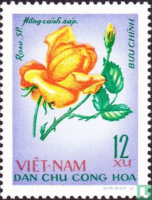 Vietnam - Noord-Vietnam - Rozen