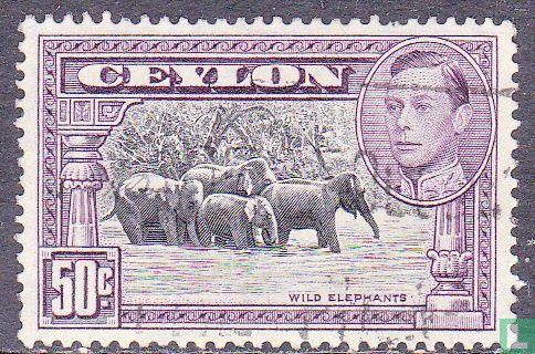 Ceylon - Olifanten
