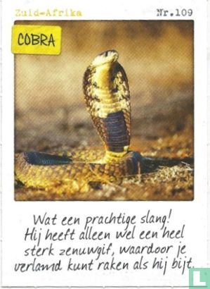 Albert Heijn - Zuid-Afrika - Cobra