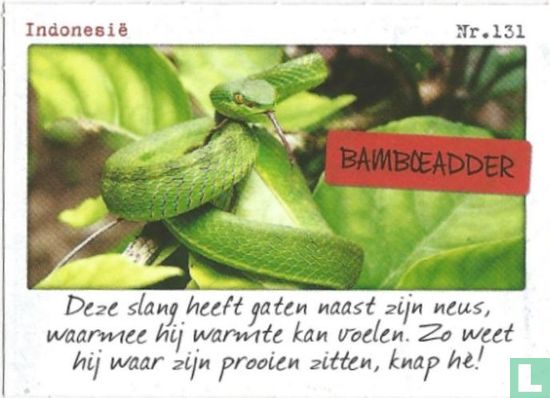 Albert Heijn - Indonesië - Bamboeadder