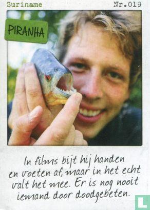 Albert Heijn - Suriname - Piranha