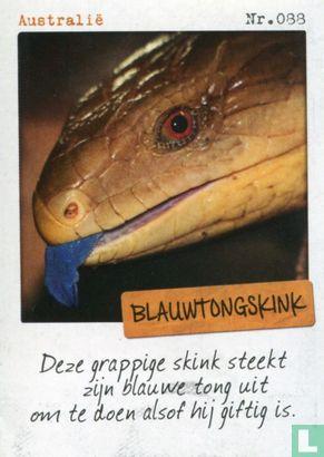 Albert Heijn - Australië - Blauwtongskink