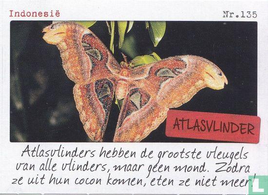 Albert Heijn - Indonesië - Atlasvlinder