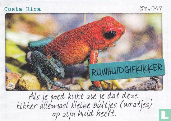 Albert Heijn - Costa Rica - Ruwhuidgifkikker
